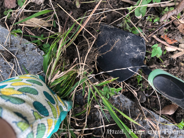 Gardening time | Mud, Pies and Pins