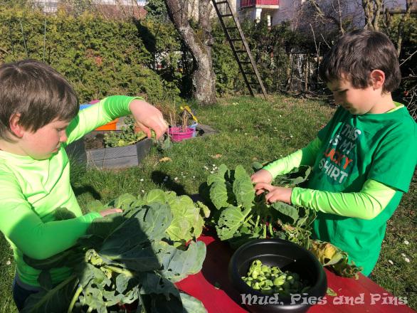 Gardening help | Mud, Pies and Pins